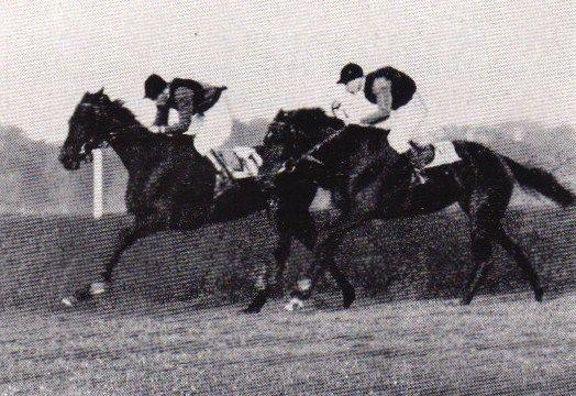 Und wieder ein Duell der beiden großen Schlenderhanerinnen im St. Leger, diesesmal behält Aubergine die Oberhand und Asterblüte hat das Nachsehen, Hein Bollow sitzt mit der ersten Farbe erneut auf dem 'falschen Pferd'. Foto Archiv
