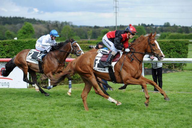 Auenperle gewinnt in Dielsdorf den Großen Zürcher Meilenpreis. Foto: Ueli Wild/horseracing.ch