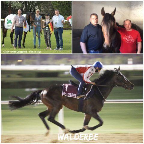 Walderbe nach dem 2. Platz im Dubai Gold Cup mit Mickaelle Michel und dem kompletten Team, rechts oben mit Racing-Manager Marc Hasselbach und Betreuer Max Ermashev. ©Turf-Times/Galoppfoto - Frank Sorge