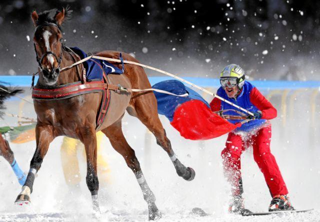 Skikjöring beim White Turf St. Moritz ': Mombasa mit Adrian von Gunten aus dem Schiergen-Stall. www.swiss-image.ch - Andy Mettler