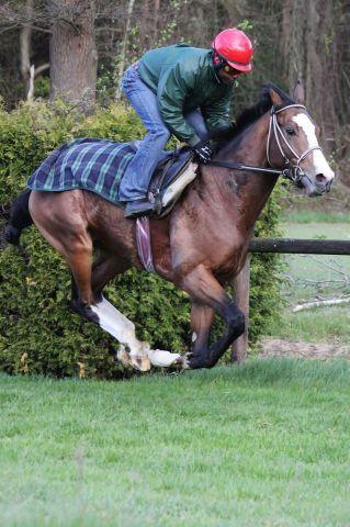 Earl of Tinsdal im Training (April 2012) Foto: www.rennstall-woehler.de