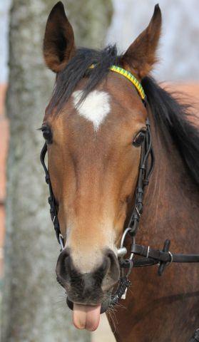 Saphira: Erste Wöhler-Starterin im Derby-Jahrgang Foto: www.rennstall-woehler.de
