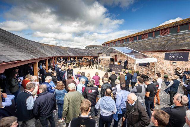 Auktionsszenario auf der Yorton Farm. Foto: Goffs