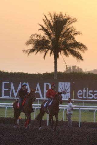 Am Samstag stehen die internationalen Rennen in Dubai im Fokus: Zazou (vorne) und Seismos mit Lisa Krüllmann bei der Morgenarbeit in Dubai. www.galoppfoto.de - Frank Sorge