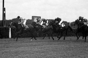 1962 gewinnt Marino mit Paul Krug den Grossen Preis der DDR. Foto: www.galoppfoto.de - Archiv: Hilde Hoppe