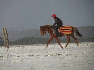 Aufgabe im Winter: Anreiten der jungen Pferde in Luckaitz. Foto: privat