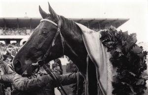 1979 Derbysieger Königsstuhl 1979. Foto: Archiv Gestüt Zoppenbroich