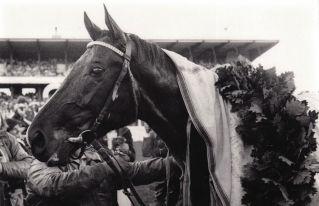 Derbysieger Königsstuhl 1979. Foto: Archiv Gestüt Zoppenbroich