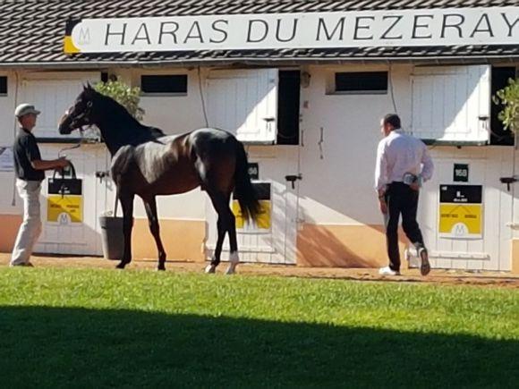 Beste äußere Bedingungen, reges Kaufinteresse: Insgesamt wurden von 339 angebotenen Pferden 261 verkauft, der Umsatz betrug knapp 40 Millionen Euro. www.dequia.de