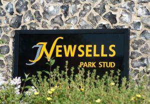 Das Gestüt Newsells Park in der Nähe von Newmarket. www.newsells-park.com