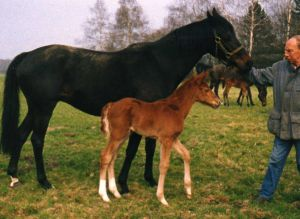 Alle aktuellen Ravensberger Mutterstuten stammen von ihr ab