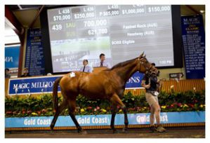 700.000 A$ zahlte Coolmore für diese Fastnet Rock-Stute courtesy by Magic Millions