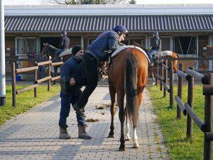 Auf gehts zur Morgenarbeit: Peter Schiergen legt Hand an. Foto: Karina Strübbe