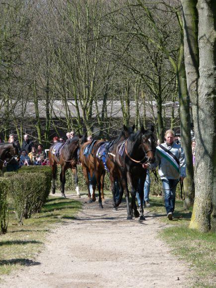 Die optimale Position am Führring muss erst gefunden werden, dann kann man auch gut Pferde gucken. Foto Karina Strübbe