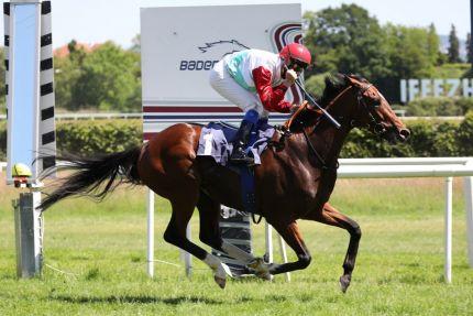 Überraschung im Derby-Trial in Baden-Baden: Accon gewinnt unter Jiri Palik zum Kurs von 20,5:1 und beschert seinem Jockey den ersten Gruppetreffer nach neun Jahren. Foto Dr. Jens Fuchs