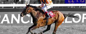 Ein Traumpferd namens Danedream