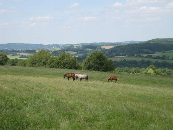 In St. Wendel, nur wenige Kilometer von Frankreich entfernt, liegt das Gestüt Ohlerweiherhof. Foto:  privat