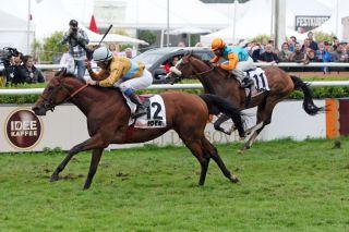 Die Wöhler-Pferde 1 - 2: Waldpark vor Earl of Tinsdal. www.galoppfoto.de