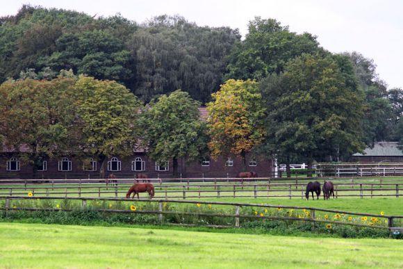 Koppeln im Gestüt Hof Ittlingen. www.galoppfoto.de - Scherning