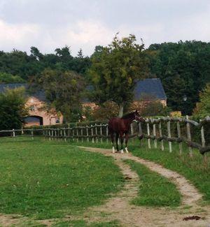 Görlsdorf