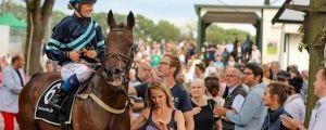 Pferde und Reiter hautnah