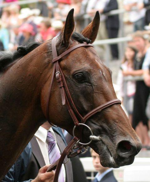 Hurricane Run hat sieben Black Type-Pferde auf der Bahn. www.galoppfoto.de - Frank Sorge