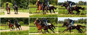 Pferde im Gleichschritt