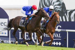 Nachgenannt für €65.000: Der Monsun-Sohn Pinzolo beim im von Australia gewonnen Investec Derby in Epsom, wo er als 14. ins Ziel kam. Foto: racehorsephotos.co.uk - Julie Drewett