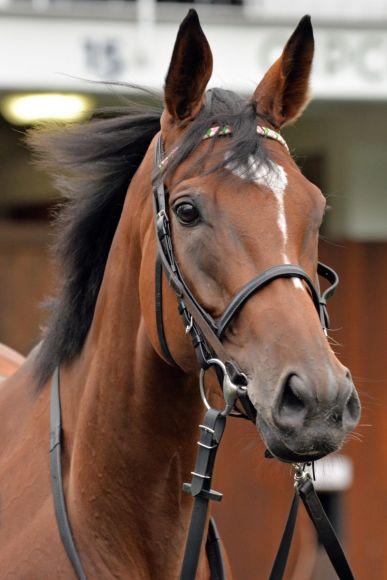 Ein Pferd für die Ewigkeit: Enable schrieb Turf-Geschichte. www.galoppfoto.de - John James Clark