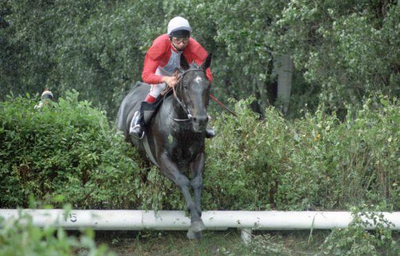 Registano in den den Farben des Gestüts Sybille war das erfolgreichste Hindernispferd im Stoltefuß-Stall