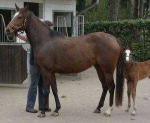 Saldentigerins Tochter Sahara mit ihrem Stutfohlen von Zamindar im März 2011. www.dequia.de