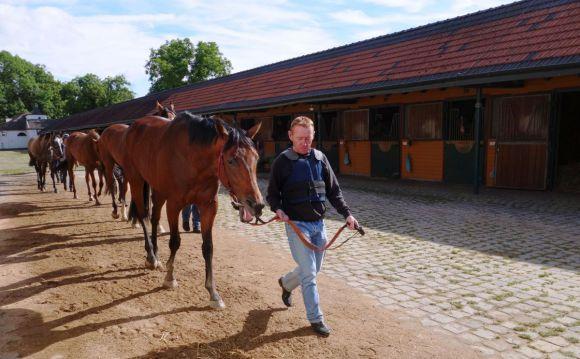 Heiter bis gelassen: Sea The Moon - hier mit Billy Newnes - gähnt im Trainingsquartier in Köln-Heumar bei der Morgenrunde. www.dequia.de