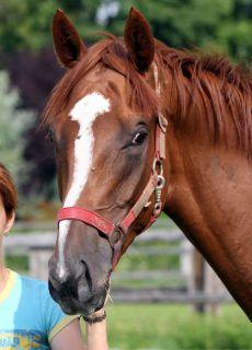 Vanjura, Siegerin der hochdotierten Istanbul Trophy. www.galoppfoto.de